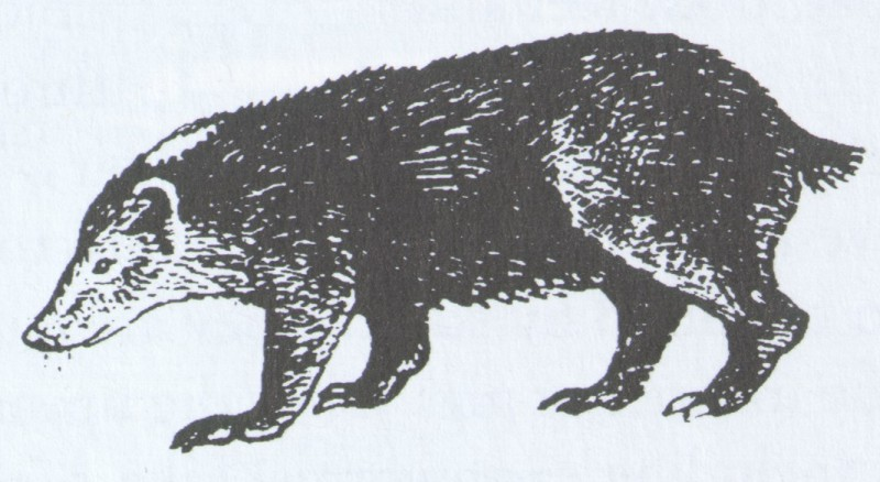 Sarah Kennedy's badger